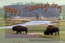 Einladungskarte, Bison, Landschaft, Text: Happy Thanksgiving
