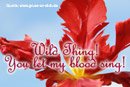 Liebesgrußkarte, Tulpe, Text: Wild Thing! You let my blood sing!