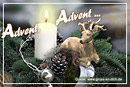 Adventskarte, Hirsch, Kerze, Text: Advent, Advent ...