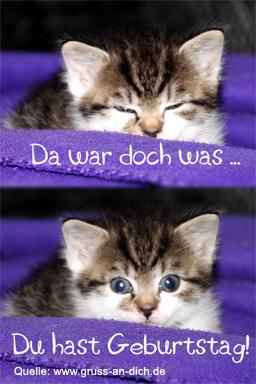 Geburtstagswunsche katze bilder