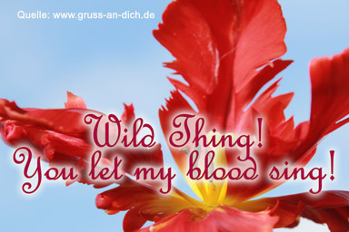 Liebeskarte, Tulpe, Text: Wild Thing! You let my blood sing!
